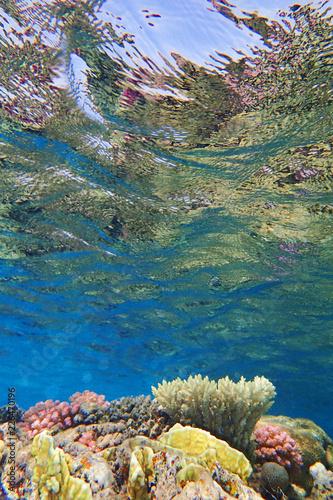 Papiers peints Recifs coralliens coral reef in Egypt