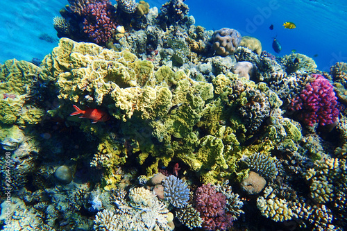 Fotobehang Koraalriffen coral reef in Egypt