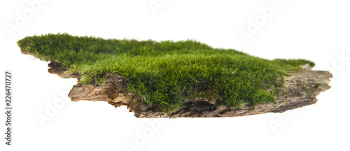 Photo Stands Bonsai green moss on a wooden board isolated on white background. As an element of packaging design.