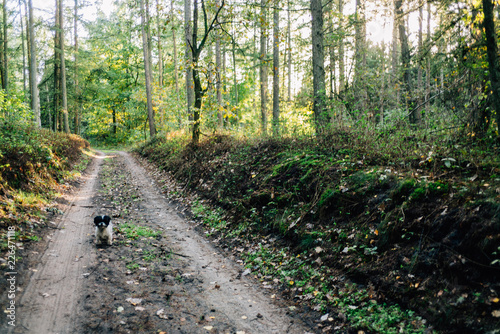 Fotografering  Herbstspaziergang mit Hund im Wald
