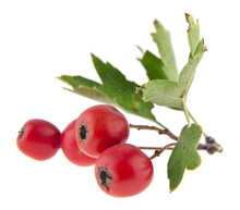 Red Berries Isolated On White Background. As An Element Of Packaging Design.