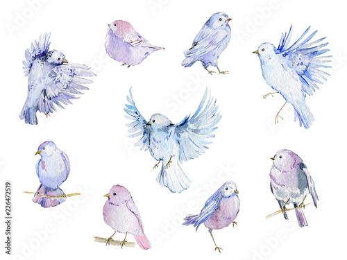 Watercolor birds collection...