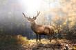 canvas print picture - Stolzer Hirsch im herbstlichen Wald