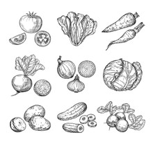 Sketch Vegetables. Fresh Tomato, Cucumber And Carrots, Potatoes. Hand Drawn Onions, Radish And Cabbage. Garden Vegetable Vector Set Of Tomato And Potato, Organic Fresh Food Illustration