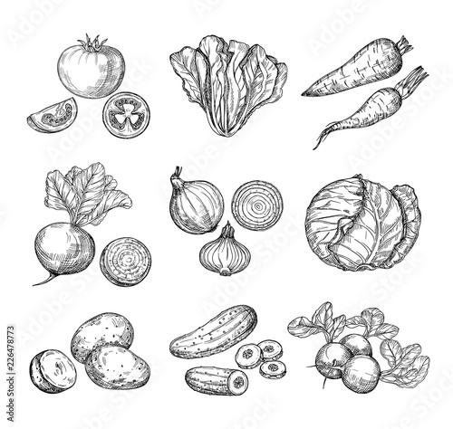 Fotografie, Obraz  Sketch vegetables