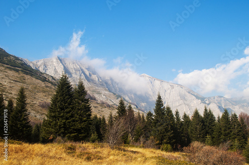 Mountain landscape in autumn, yellow grass and trees, peak in clouds in distance. #226479178