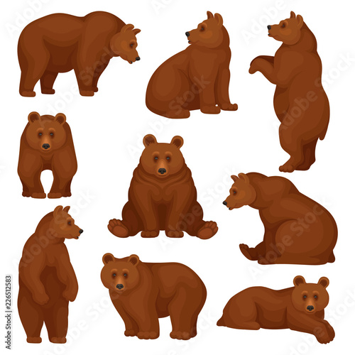 Fotografie, Tablou  Flat vector set of large bear in different poses