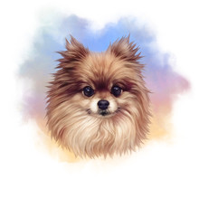 Pomeranian. Illustration Of A ...