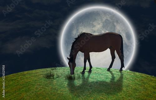 Koń i księżyc w pełni