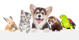 Fototapeta Animals - Group of pets together over white banner. isolated on white background