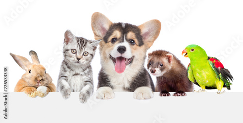 Obraz Group of pets together over white banner. isolated on white background - fototapety do salonu