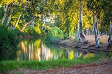 Trees On The River Reflection At Park Yarkon Background.