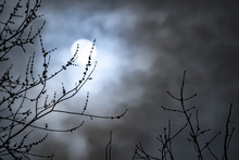 Full Moon With White Clouds With Bare Tree Branches. Concepts Of Lunar Cycle, Midnight, Night