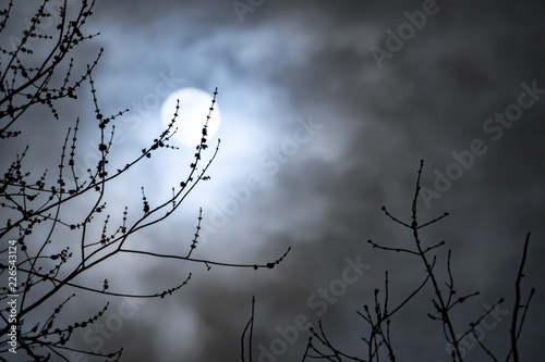 Full moon with white clouds with bare tree branches Canvas-taulu