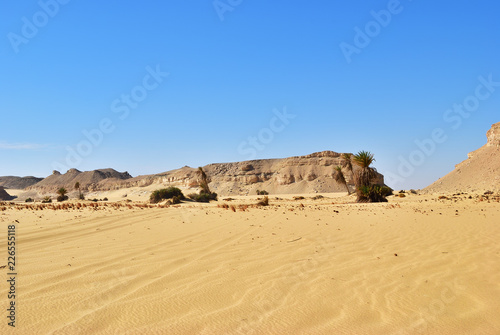 Landscape of the Western desert Sahara, Egypt