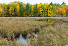 Native Lakeshore Grasses And Marsh In Autumn