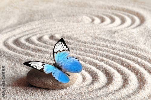 Foto op Plexiglas Stenen in het Zand Sand, blue butterfly and spa stone in zen garden. Spa concept.