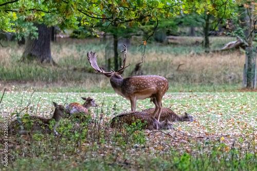 Garden Poster Bestsellers Deer in the wild