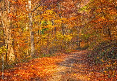 Foto op Canvas Herfst Nice autumnal scene in the forest