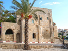 Date Palm Tree Against The Background Of The Old Building. Jaffa, Israel