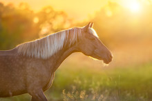Beautiful Horse With Long Blon...
