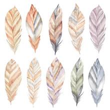Watercolor Feathers Set. Boho ...