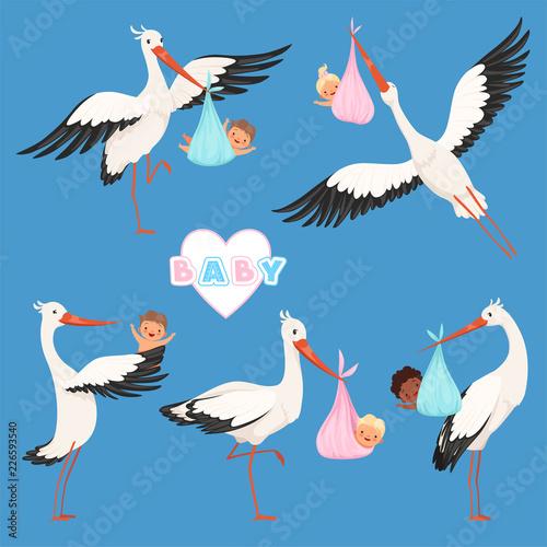 Fototapeta Flying stork baby