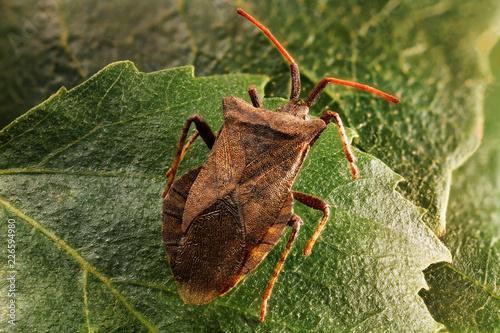 Staande foto Macrofotografie Little bug with a moustache