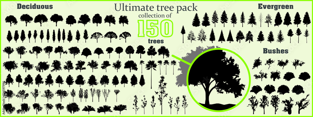 Fototapety, obrazy: Ultimate tree collection, 150 detailed, different tree vectors