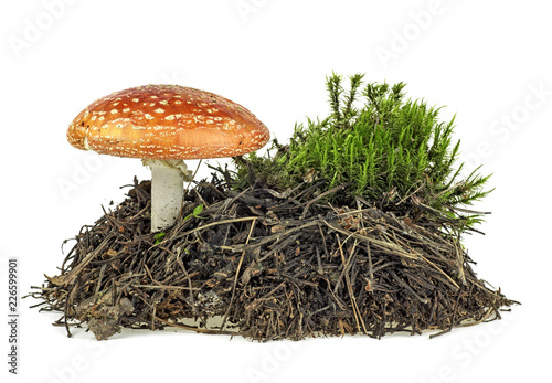Photo Fly agaric mushroom with green moss isolated over white background