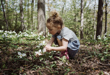 Girl Picking White Flowers From Field While Crouching In Forest
