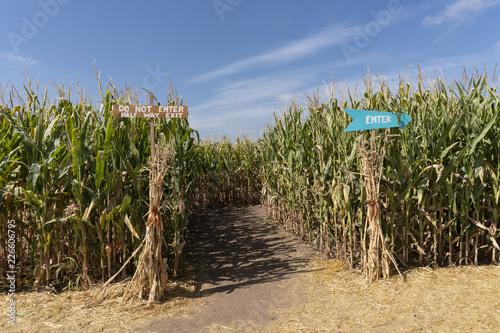 Vászonkép Corn Maze Entrance with Signs