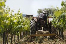 Rear View Of Farmer Plowing Fi...