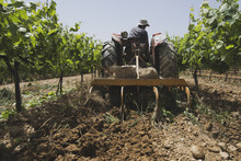 Rear View Of Farmer Plowing Field Amidst Plants Using Tractor