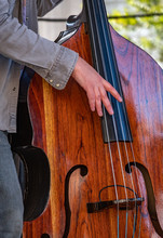 The Upright Bass Player