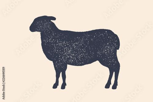 Fotografie, Obraz Lamb, sheep