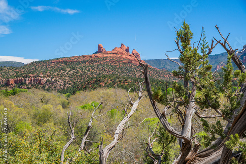 Landscape in Sedona Wallpaper Mural