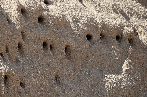 Fotografía Closeup of Sand Martin Nests in a hillside
