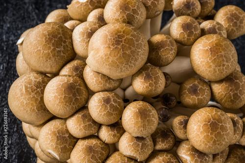 Fotobehang Assortiment 美味しいきのこの盛り合わせ delicious mushroom platter