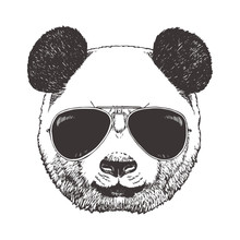 Portrait Of Panda With Glasses, Hand-drawn Illustration, Vector