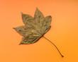 Maple leaf on an orange background.