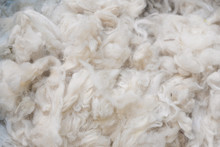 Close Up Of Australian Merino ...