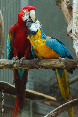 Tuinposter Papegaai Papuga Ara