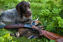 Dog And Hunting Trophy After S...