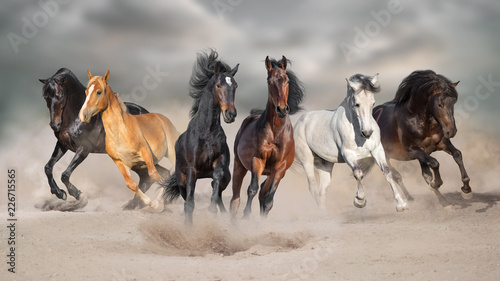 La pose en embrasure Chevaux Horses run gallop free in desert dust against storm sky