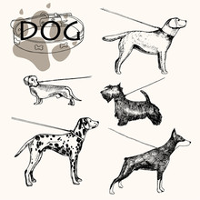 Vector Illustration. Hand Drawn Dog On A Leash. Dog Breeds Dalmatians, Doberman, Scotch Terrier, Dachshund Basset, Labrador Retriever