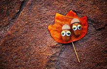 Acorn Eyes Autumn Leaf