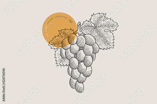 Valokuvatapetti Image of bunch of grapes in an engraving style on light background