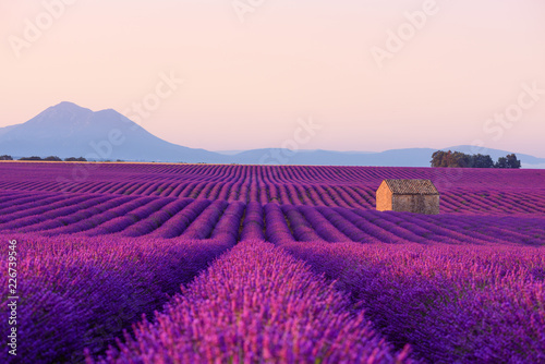 Poster Violet Farm house in beautiful blooming lavender field in Provence