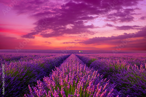 Foto auf Gartenposter Lavendel Lavender field at sunset. Beutiful blossoming lavender bushes rows with lonely farm house in the fileds iconic landscape Provence France.